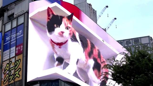 VIDEO OF GIANT 3D CAT MOVING ON 'BIGGEST' BILLBOARD GOES VIRAL